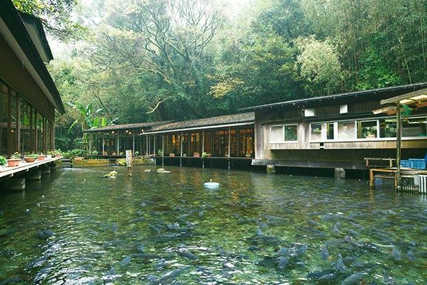 宮崎県小林市「泉の鯉」へ。日本名水百選のきれいな水で育てられた、臭みがない鯉のお刺身を