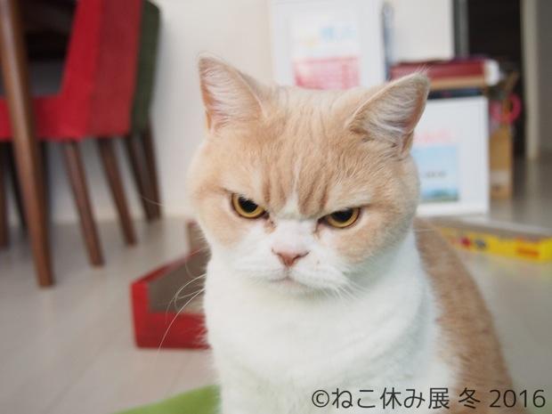 もふもふ猫に怒り顔猫。インスタで人気爆発のカリスマ猫写真展!〈ねこ休み展 冬 2016〉|コロカルニュース