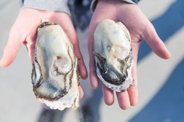 漁師直送! 牡蠣メンバーシップ〈カキの環〉が宮城県石巻市で始動。あなたはどの漁師さんを選ぶ?!|コロカルニュース