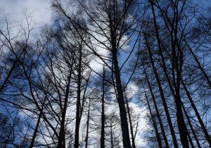 """購入した土地から大量の木の枝が…! 森林伐採に潜む""""闇"""""""